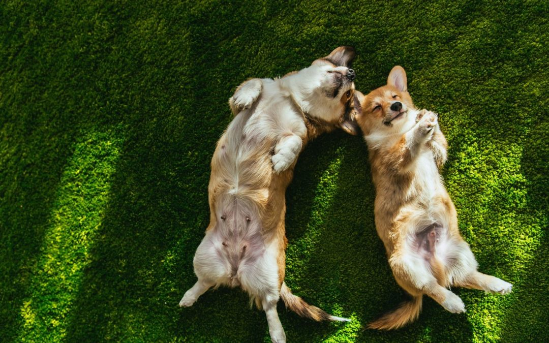 Make Your Lawn the Perfect Summer Hangout with the Finest Artificial Grass for Dogs