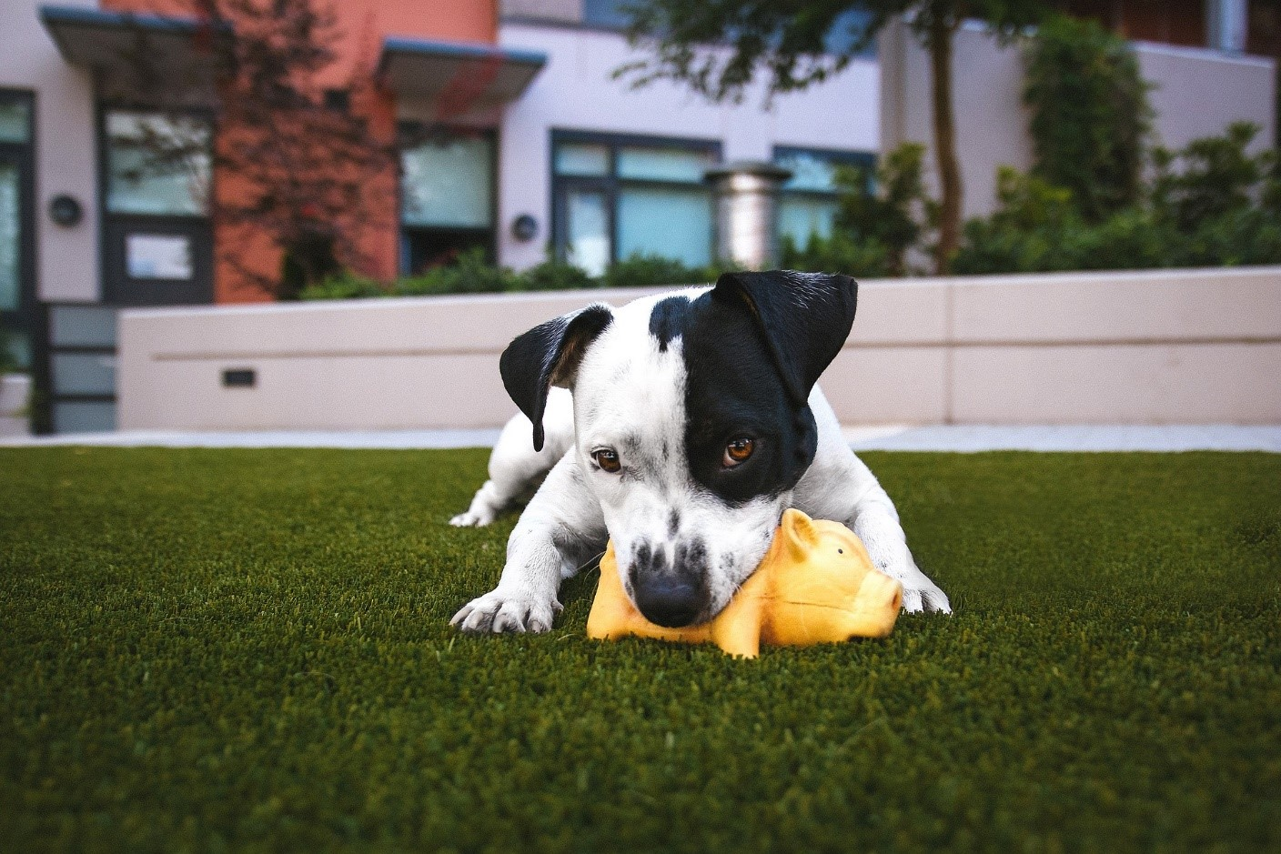 dogs artificial turf
